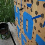 Bee Hotel--emerging bee; img_0473; John Holbrook, Missoula