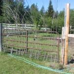 Serviceberry woven through gate