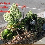GuerrillaGardening.org