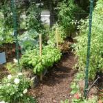 Straw Bale Garden (Wikipedia)