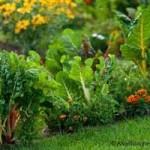 Veggie Landscape Garden