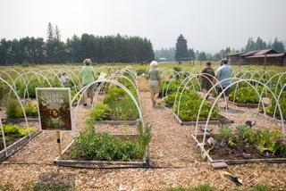 Bigfork/Ferndale Community Garden, 2014